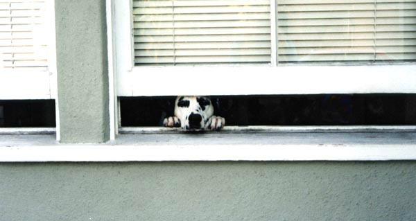 Penny in Window