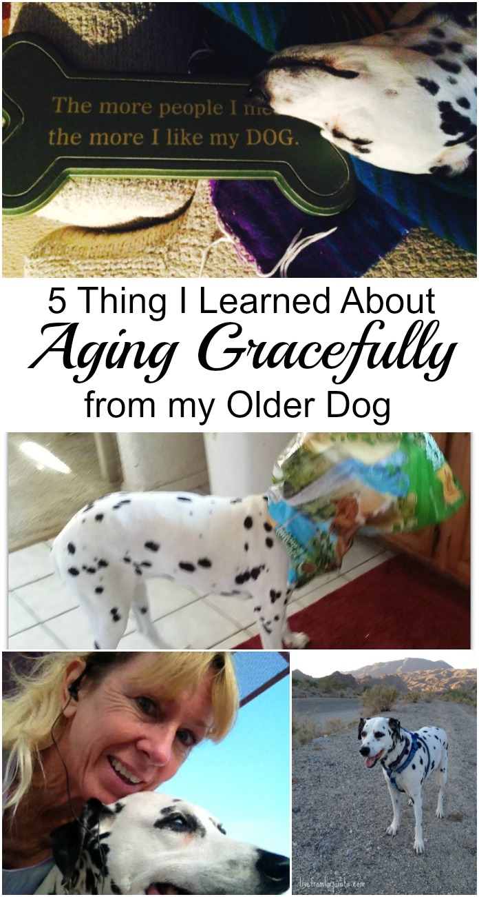 We can learn a lot from our pets. Here are 5 things I learned about aging gracefully from my older dog.