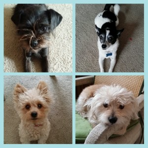 Meet the Pack, Part 2: The Little Dogs