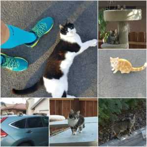 New from the Dog Rescuer: Rescuing Cats!
