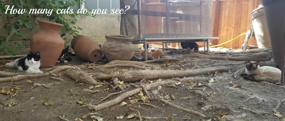 I've talked about all the dogs that we have rescued, but I don't often talk about rescuing cats. Alan and I feed the feral cats and we're asking for help.